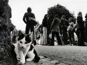 katten-i-Bastad-kopia