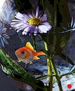 blomma-i-glasskal_med_fisk_kant1
