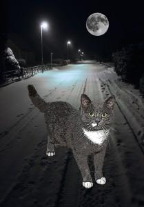 tuss_snow4